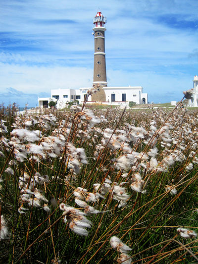 Architecture Building Exterior Built Structure Cabo Polonio Cabo Polonio - Uruguay Day Flower Grass Lighthouse Nature No People Outdoors Plant Sky EyeEmNewHere