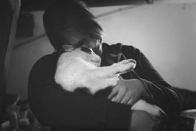 Cat Love Tierheimamsee