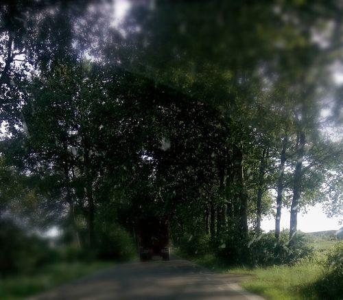 local road trip /* Nature On The Road EyeEm Nature Lover Tree And Sky Mobilephotography EyeEm Team Dutch Countysidesummer Eyeem Market ♧