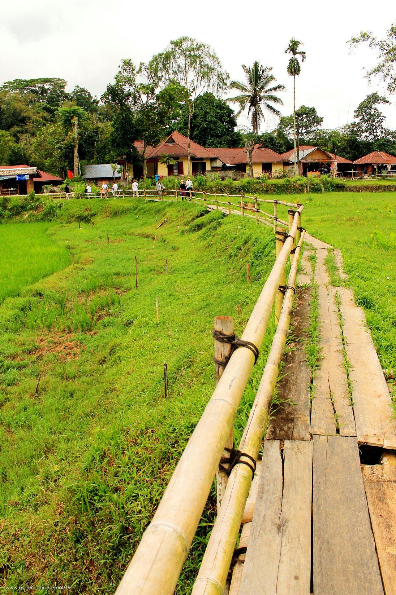 Grass Green Color Growth Outdoors Kete Kesu Rantepao Toraja Toraja Utara Travel Destinations INDONESIA