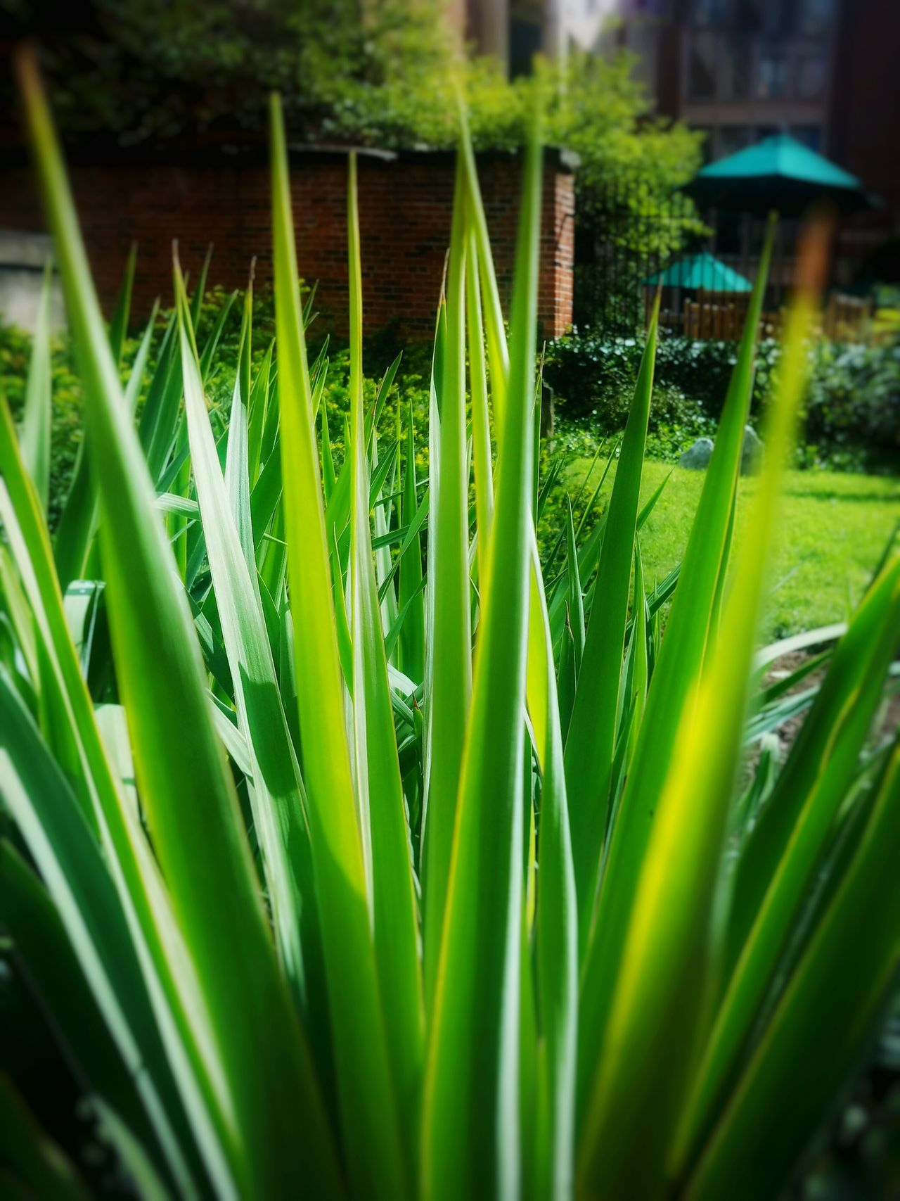 Growth Nature Photography Nature_collection Naturelover Nature On Your Doorstep Natural Beauty Natureporn Green Color Green Nature Be Happy And Enjoy The Little Things Love One Another StillLifePhotography Enjoying What I Do Taking Photos ❤ Stilllearning Chillaxing Live, Love, Laugh