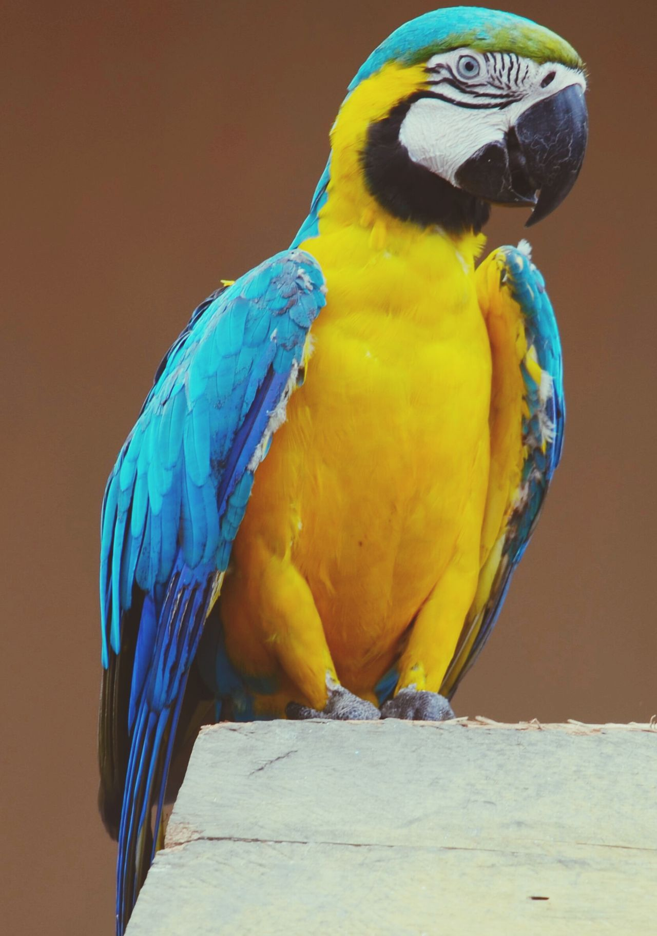 Travel Colombia Parrot Fauna Animal Colorful Rainforest Bird Simple Colors In Nature