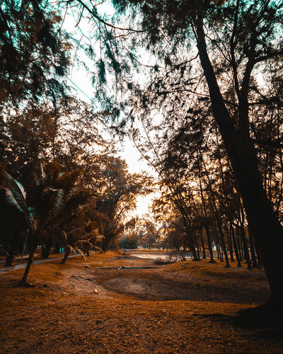 City Beauty In Nature Branch Day Forest Growth Landscape Nature No People Outdoors Scenics Sky Sunlight Tranquil Scene Tranquility Tree Tree Trunk Urban
