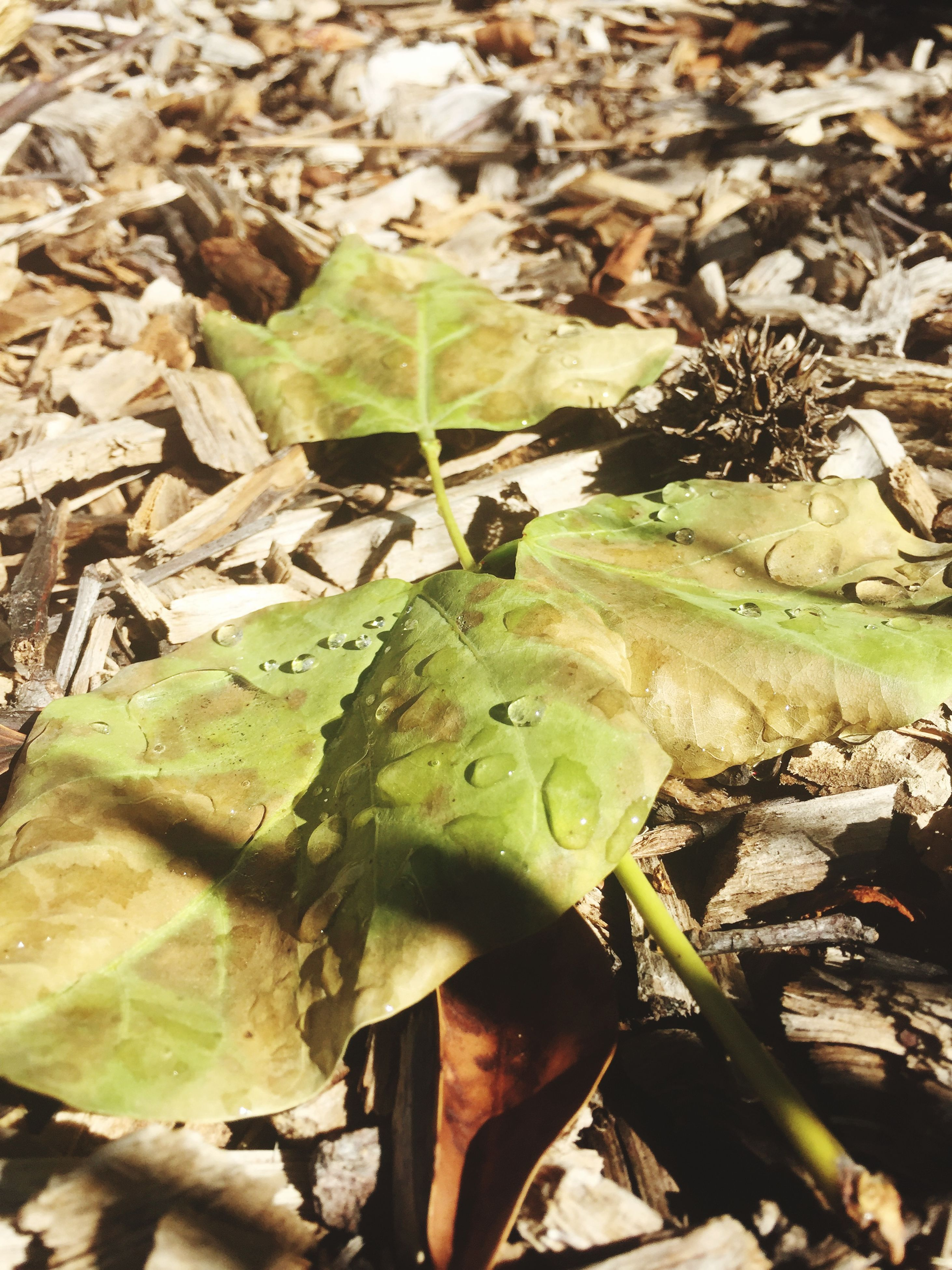 leaf, close-up, green color, nature, high angle view, field, leaves, growth, plant, dry, day, outdoors, dirt, no people, focus on foreground, fallen, selective focus, ground, wood - material, sunlight