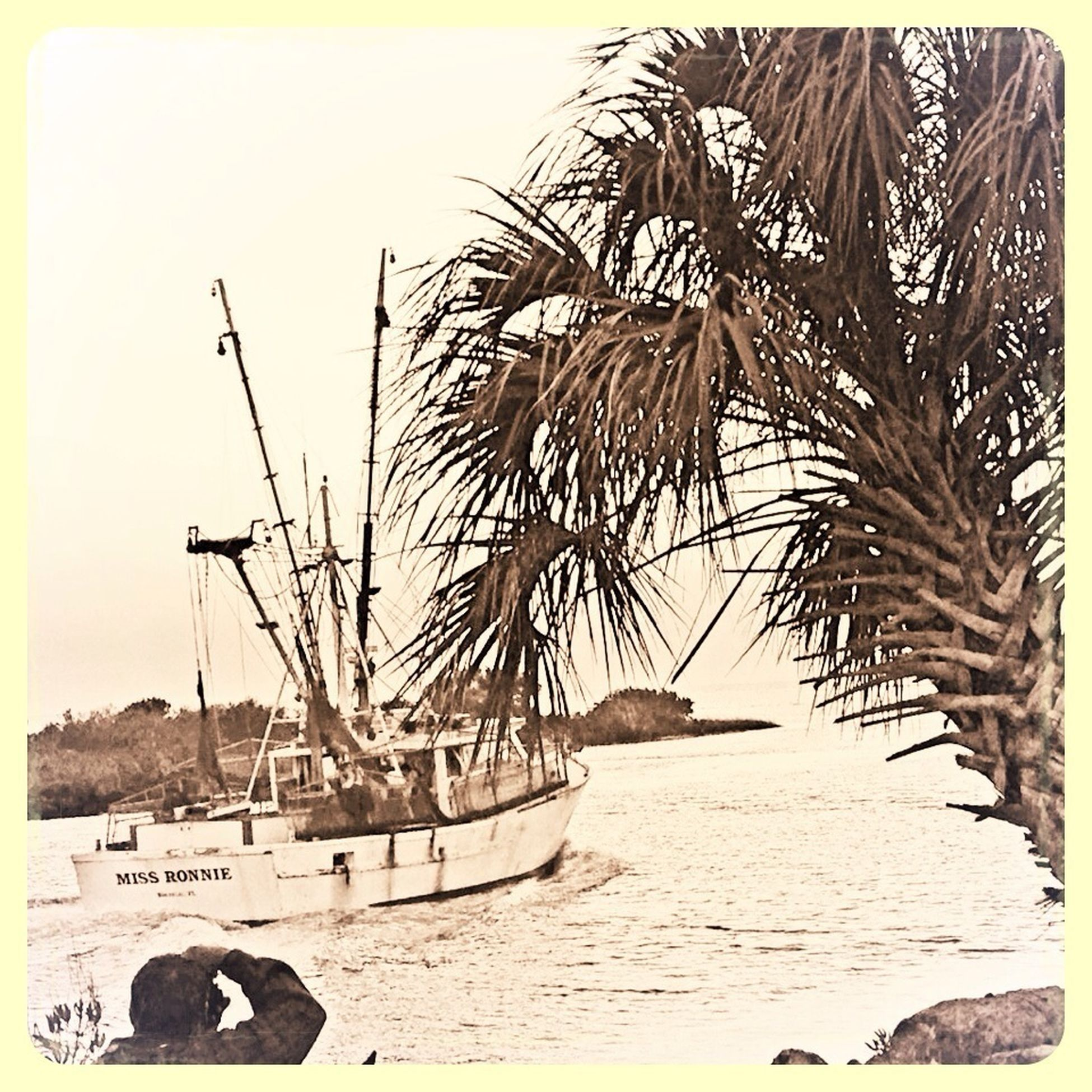 nautical vessel, palm tree, water, outdoors, boat, sea, beach, moored, mode of transport, silhouette, shore, sky, ship, sand, transportation, vessel, watercraft, craft, transportation, vehicle, ship, transport, pirate, sank, wreck, conveyance, animal, echinoderm, echinoids, urchins, freshwater, marine, tropical climate, cold, cold temperature, winter, environmental conservation