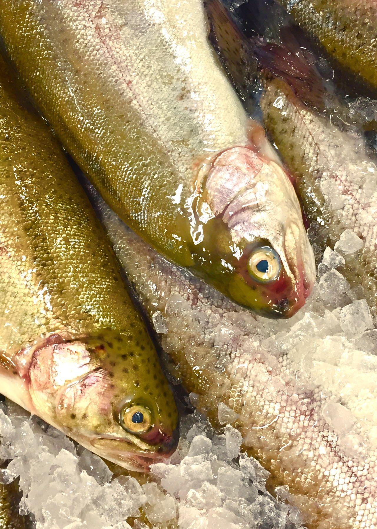 Fish Display DEAD FISH Supermarket Display Of Fish Fresh Trout Trout Fresh Fish