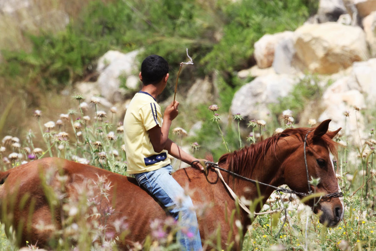 Boy on Horse Animal Themes Beauty In Nature Boy Brown Child Close-up Day Domestic Animals Field Focus On Foreground Grass Herbivorous Horse Horse Back Riding Kid Landscape Livestock Long Grass Mammal Nature Outdoors Selective Focus