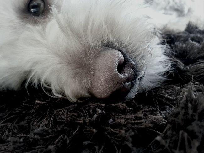 "Dog Sleep Noise Brown""please leave me alone! I wanna sleep"""