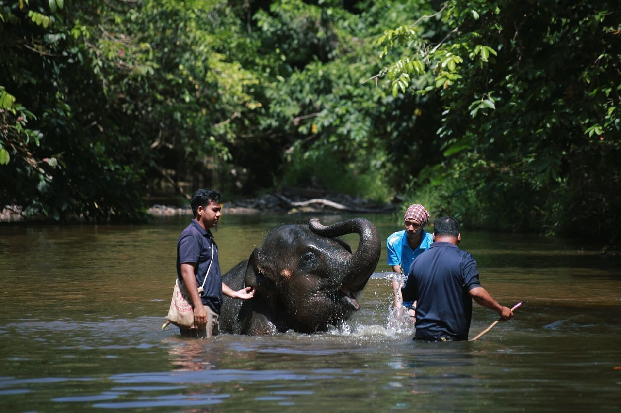 Beautiful stock photos of elefant, water, river, young adult, happiness