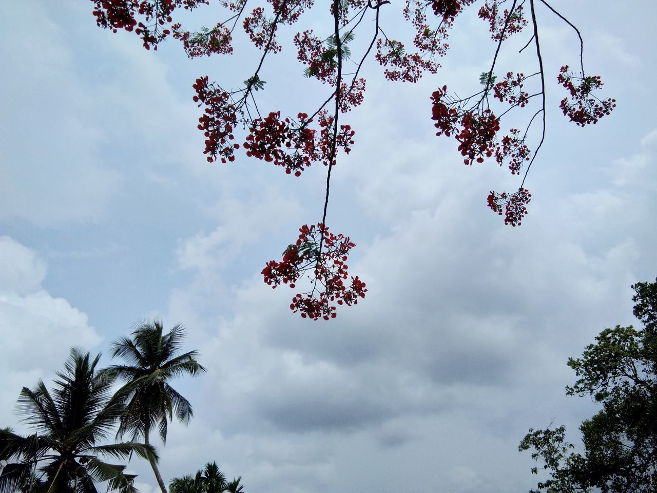 tree, low angle view, sky, cloud - sky, growth, day, outdoors, nature, beauty in nature, no people, branch, palm tree