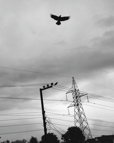 Nature Love Beauty Hello World Check This Out The Sky Fascinates Me.... Sky_ Collection The Sky Is Telling You A Story.. The Sky Is Always Beautiful Bird Photography Birds In Flight Birdphotography Quality Time Photography Photooftheday Pivotal Ideas Taking Photos