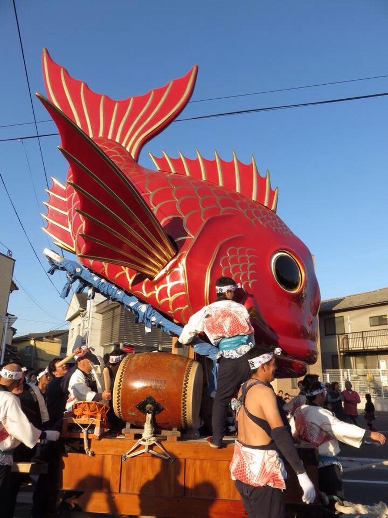Festival JapaneseFestival Saga Karatsu Karatsukunchi 佐賀 唐津 鯛