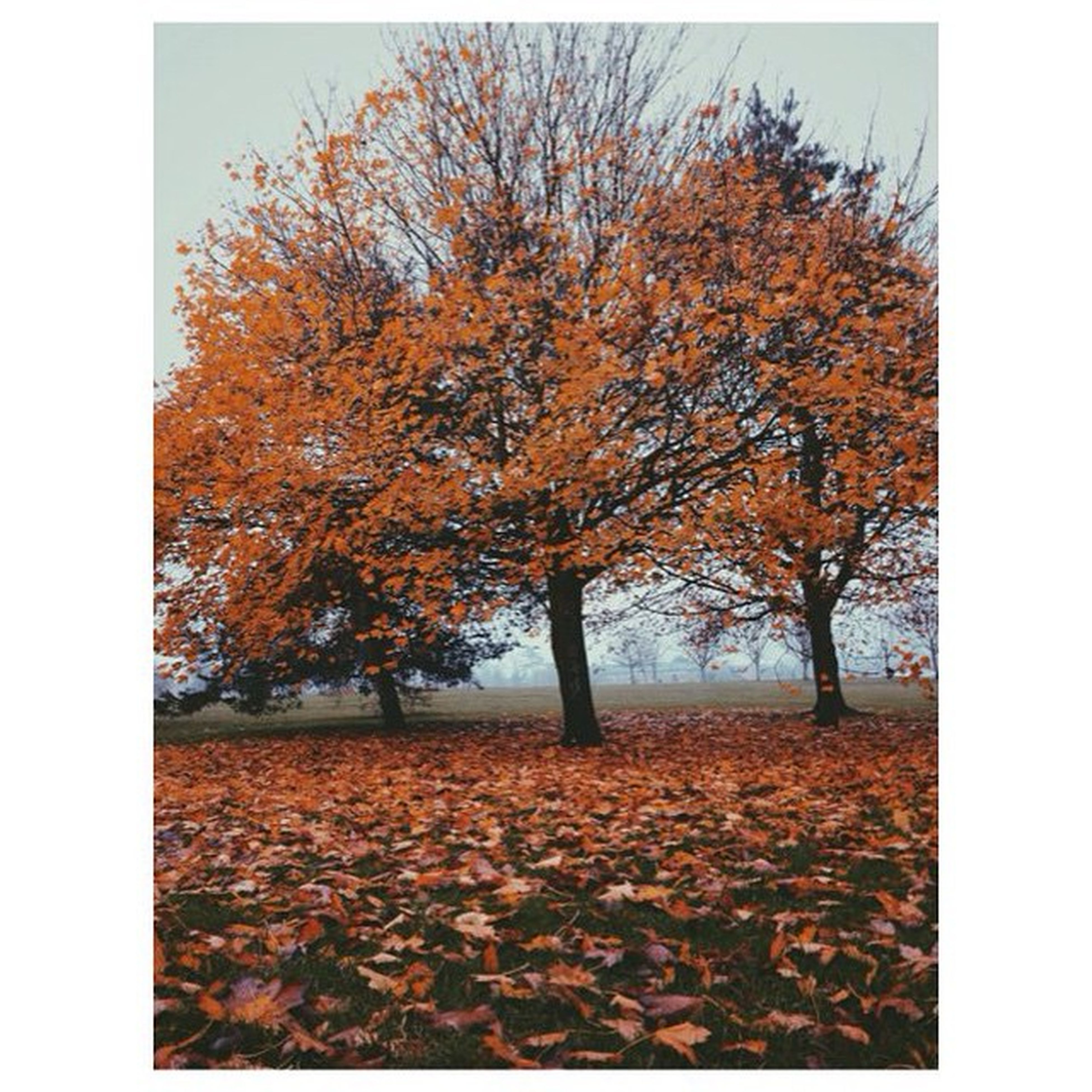 autumn, transfer print, change, season, tree, auto post production filter, leaf, tranquility, orange color, nature, beauty in nature, tranquil scene, field, fallen, scenics, landscape, branch, leaves, day, clear sky