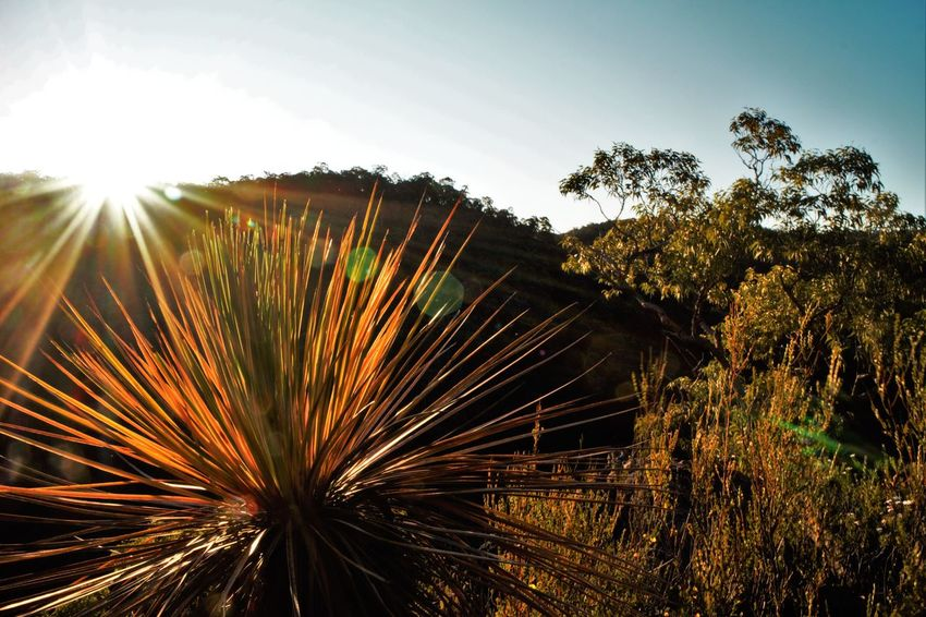 Australian Bush Blue Mountains National Park Trees Hiking Beauty In Nature First