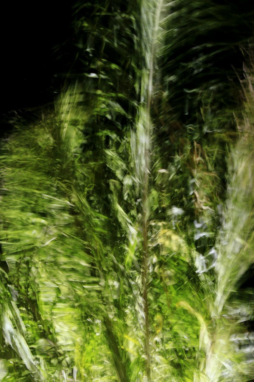 growth, nature, plant, grass, no people, frond, green color, beauty in nature, outdoors, day, leaf, freshness, fern, close-up, fragility, water