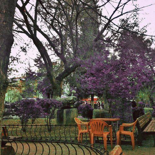 Instaturkey . Instagramt ürkiye. Instahub . Instagood . cafe park. tree gununkaresi. gununfotografi