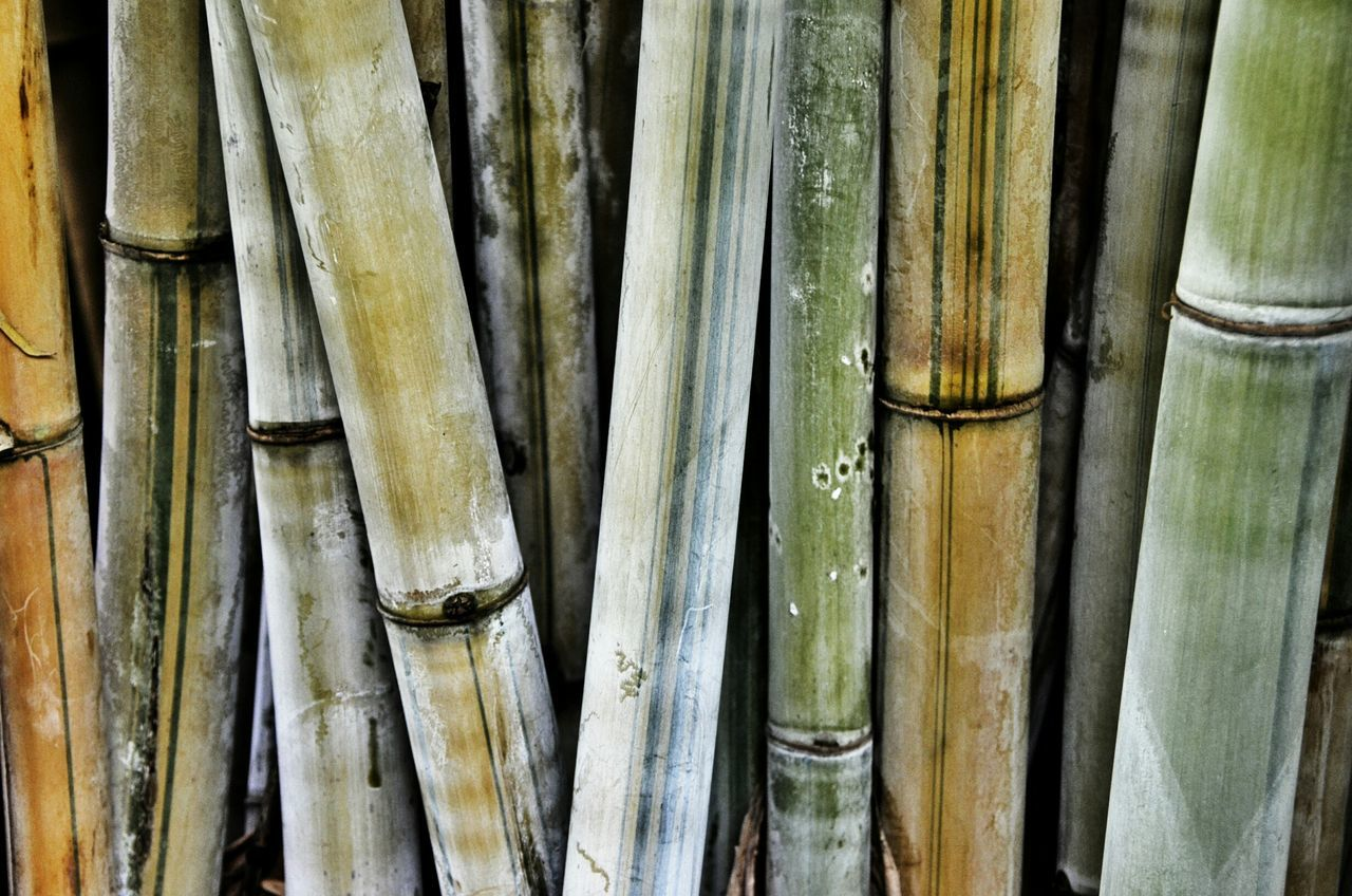 Bamboo Beauty Redefined Bamboodesign Bamboo Shoots Colorful Bamboo Bamboo Tree... Bamboo Forest Bamboos Bamboo Trees Bamboo Grove Bamboogrove Mount Botanical Gardens The EyeEm Facebook Cover Challenge