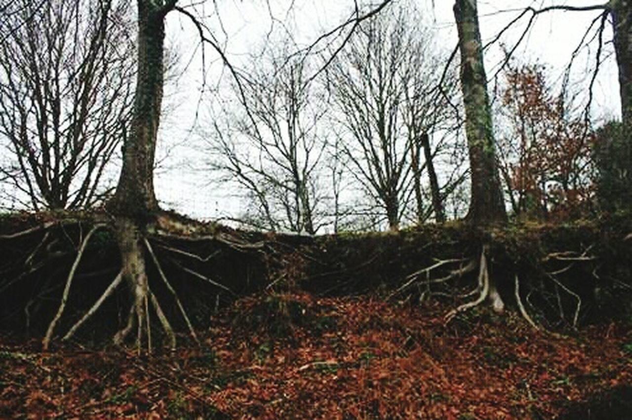 GêresPortugal Ecovia Vianadocastelo Portugal Trees Natureza🍁 Tranquility Root Tree Colour Of Life