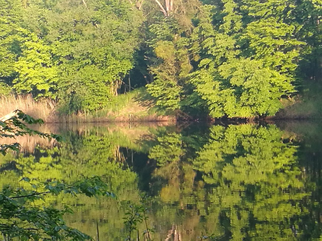reflection, nature, lake, tree, standing water, forest, green color, water, tranquility, lush foliage, outdoors, beauty in nature, tranquil scene, no people, growth, day, scenics