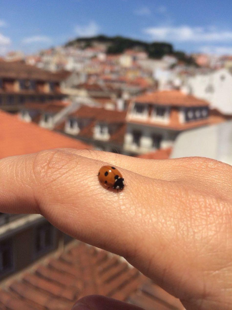 Ladybug Hand Nature Lisboa Lisbon Closeup CF
