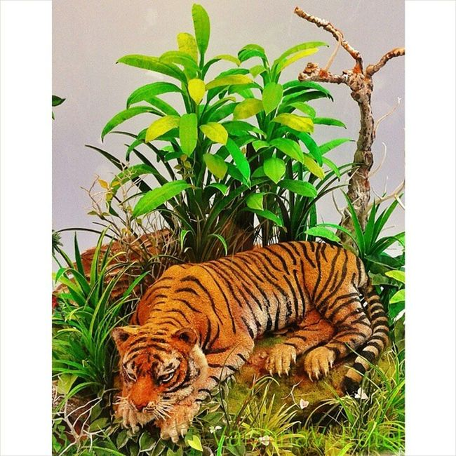 A miniature art model of a tiger displayed in a small jar Looks real :) Life_in_a_jar Iitb Techfest Green grass garden cute tiger instagram photographyshoutout3 InstaMumbai collegecampus selfclicked fun animal animal_insta art 1000thingstodoinmumbai bns_flowers nature camera_incentives goodnight :)