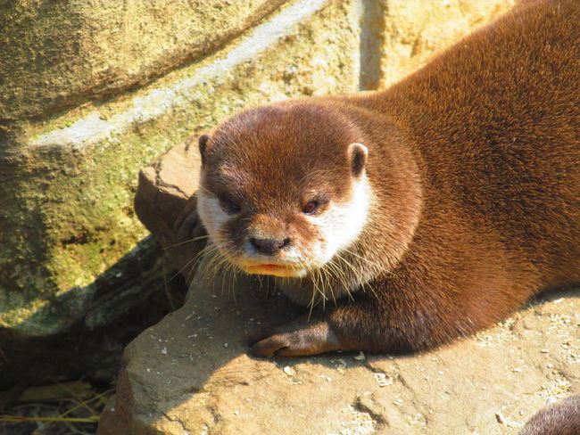 Otters Beauty In Nature Cute♡