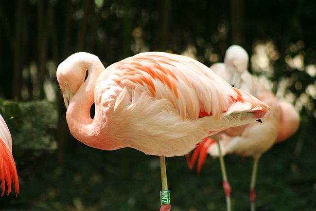 No Filter Peace And Quiet Nature Flamingo Pink Bird Flamant Rose Zoo Animals France