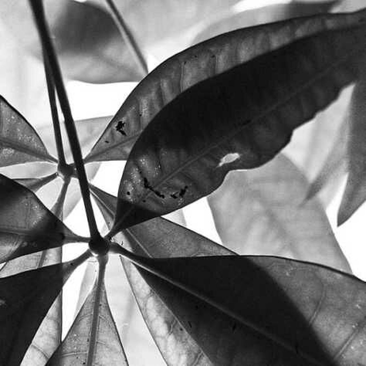 leaf, shadow, no people, close-up, day, outdoors