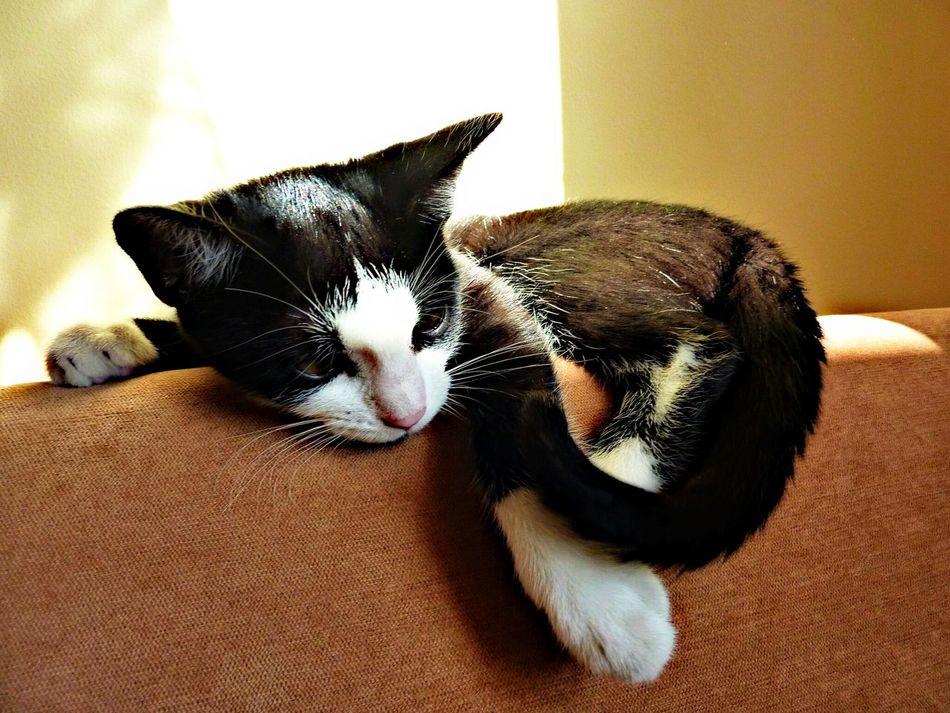 Cat Animal Black And White B&w