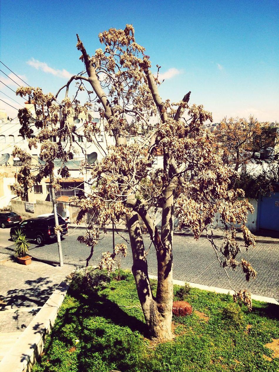 Natural Tree Amman Hugging A Tree