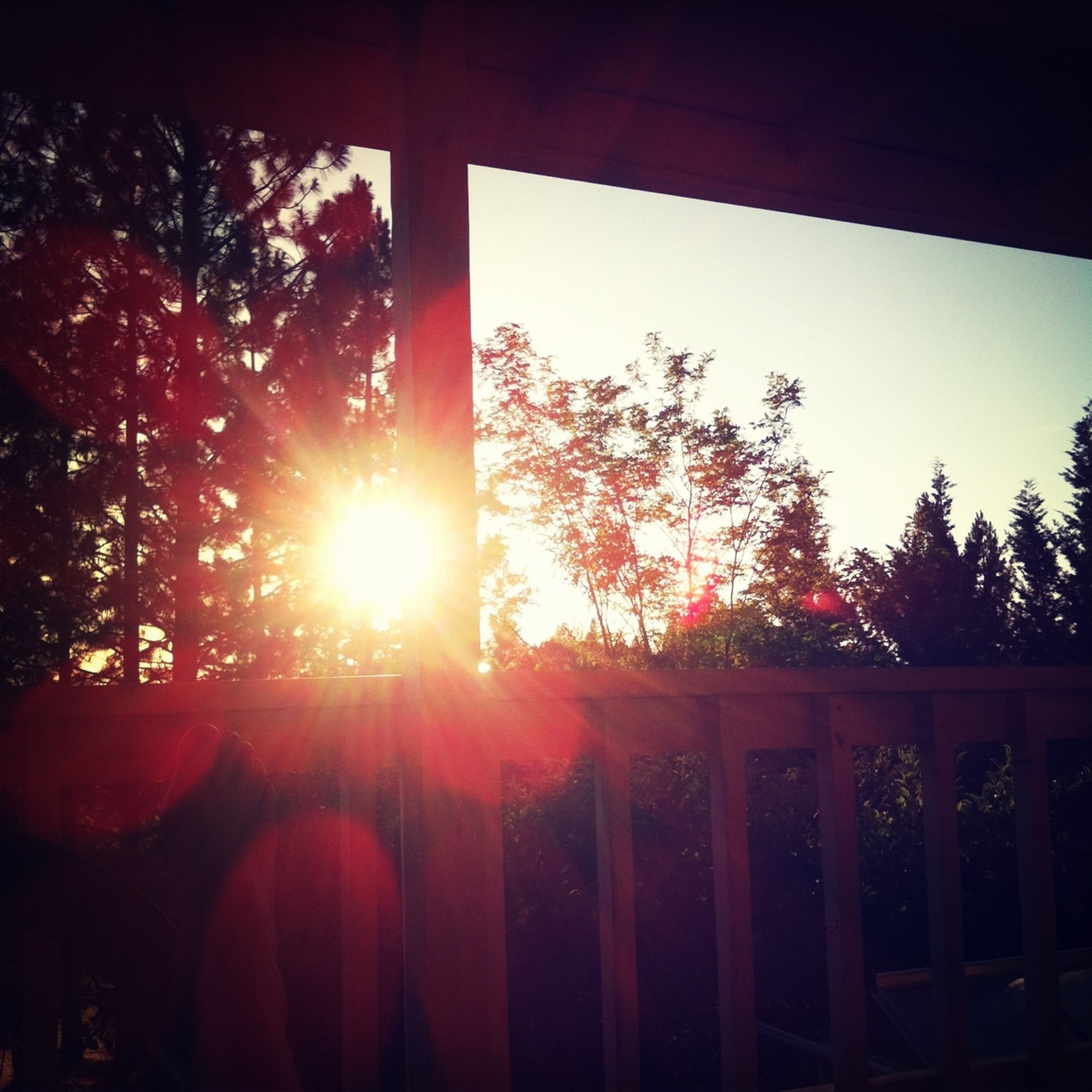sun, sunset, sunlight, tree, sunbeam, silhouette, lens flare, clear sky, nature, sky, orange color, tranquility, beauty in nature, no people, tranquil scene, window, outdoors, scenics, railing, built structure