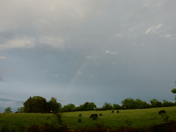Rainbows during my 2016 Tennessee Vacation <3 . Beauty In Nature Blue Sky And Clouds Cloud Cloud - Sky Field Grassy Grazing Green Color JustJennifer@TruthIsBeauty Landscape Livestock Nature No People Outdoors Rainbow Sky Rainbow🌈 Raw And Untouched Rural Scene Scenics Sky Tranquil Scene Tranquility Trees And Sky TruthIsBeauty Photographic Art 🌷 TruthIsBeauty 💯
