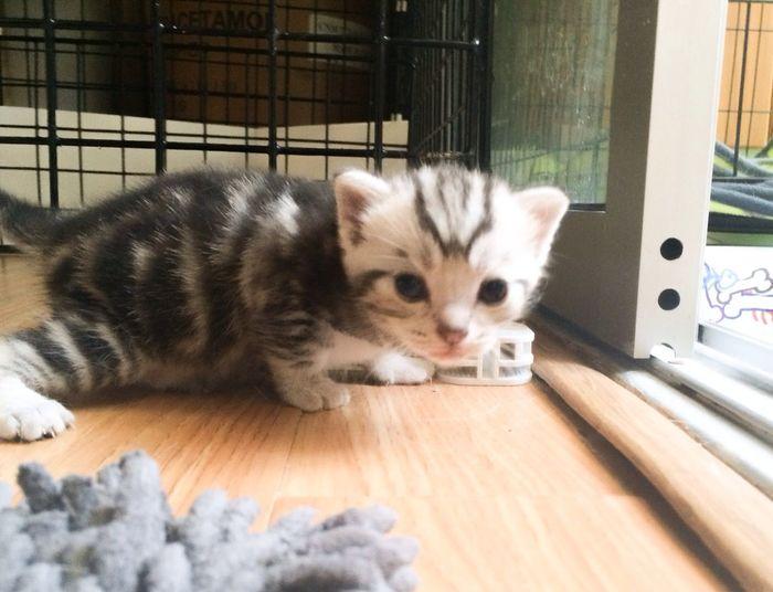 Hi everybody ^_^ Cat Kitten Cute Cats