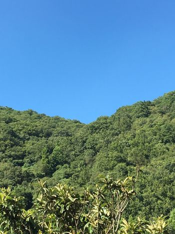 Blue Green Nature Mountain Treetop Outdoors Day Non-urban Scene Clear Sky Growth Green Color