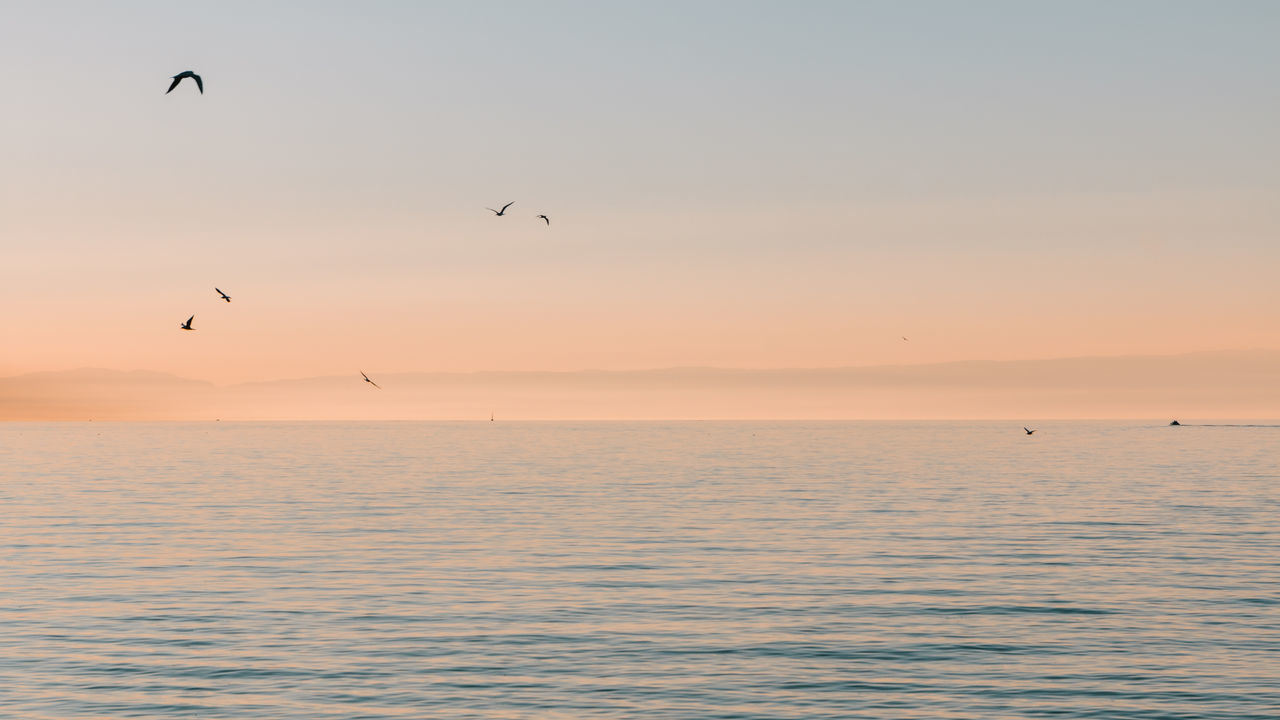 Geneva Lake Animal Themes Animals In The Wild Beauty In Nature Bird Clear Sky Day Flying Horizon Over Water Mid-air Nature No People Outdoors Scenics Sea Silhouette Sky Sunset Swiss Landscape Tranquil Scene Tranquility Water Waterfront