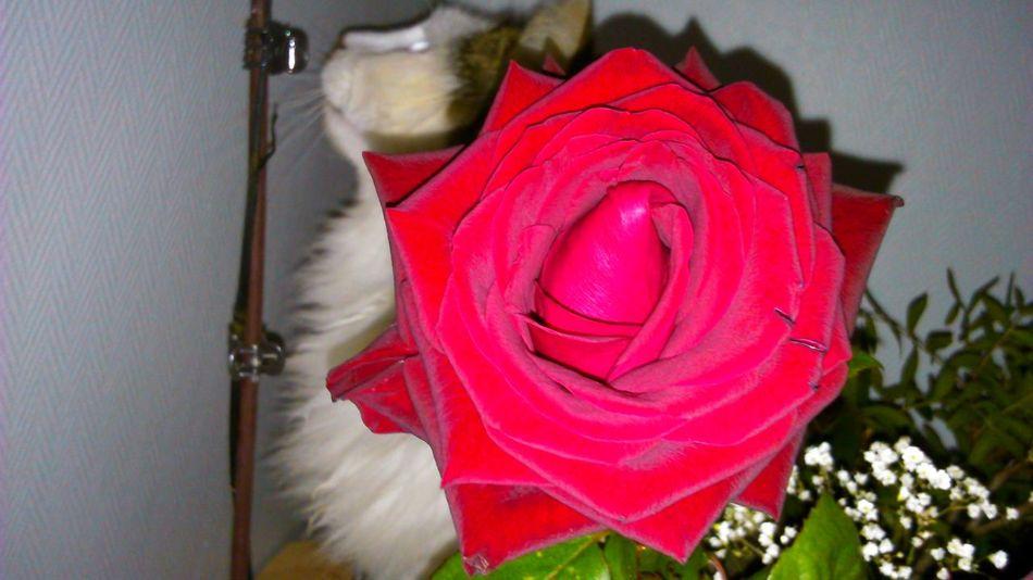 Ou est Charly ?! Cat Flower Cache-cache Cute Pets