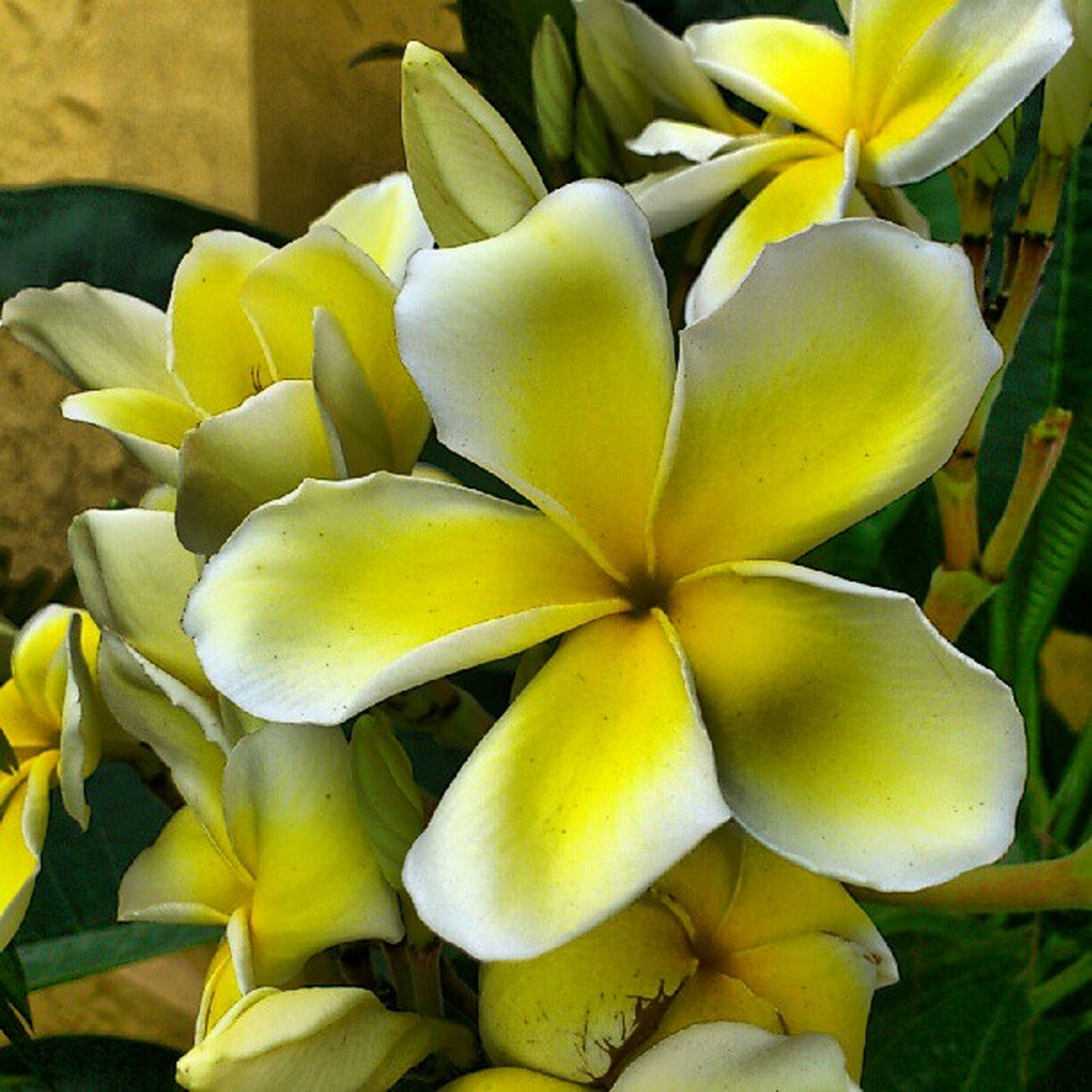 flower, petal, yellow, freshness, flower head, fragility, growth, close-up, beauty in nature, plant, nature, blooming, leaf, indoors, high angle view, no people, day, orchid, in bloom