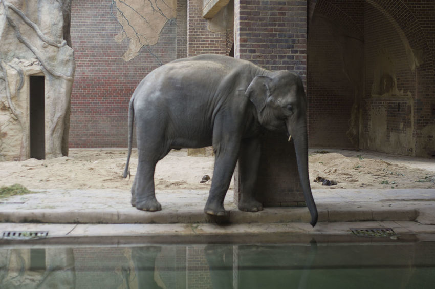 Leipzig Leipziger Zoo Sadness