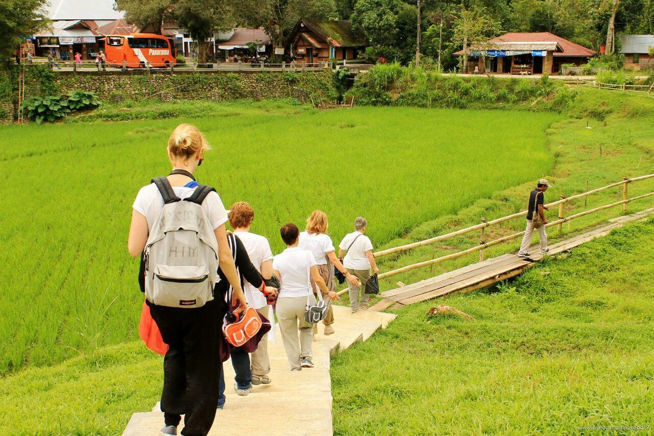 Green Hill Nature Green Tourist Green Grass Kete Kesu Rantepao Toraja Utara Toraja Travel Destinations Outdoors INDONESIA