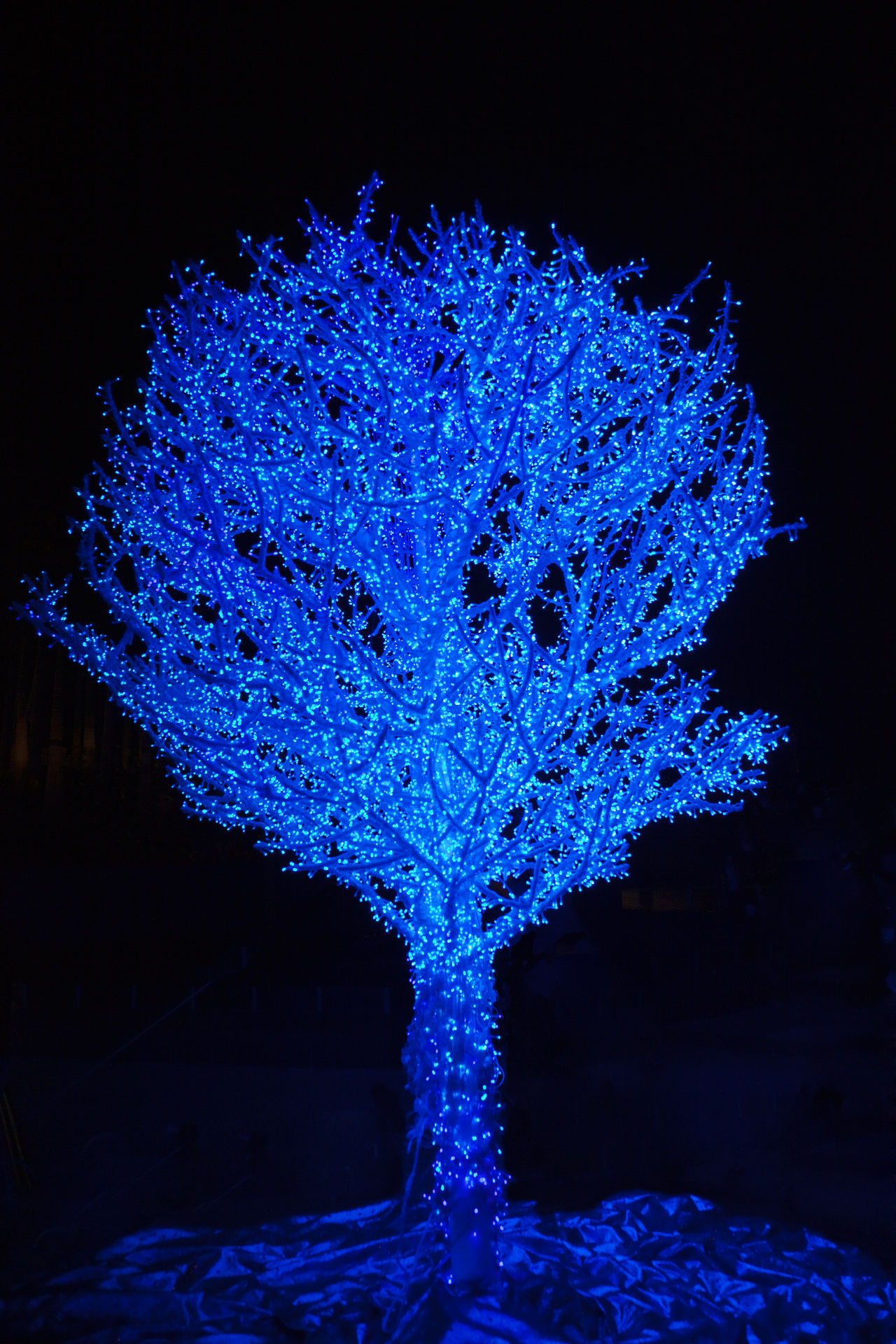 Blue Tree decorated with fairy lights for Christmas - Hong Kong at Night, China, Asia Beauty In Nature Blue Celebration Christmas Christmas Decoration Christmas Lights Christmas Tree Fairy Fairytale  Illuminated Kitsch Light Merry Christmas! Nature Night No People Silhouette Silhouettes Single Tree Tree Winter Xmas Xmas Decorations Xmas Time Xmas Tree