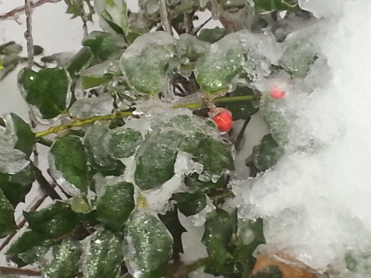 06516 Ice Storm 2015  Simple Elegance Home Sweet Home Encased In Ice Berry Mother Nature Dec In Ct