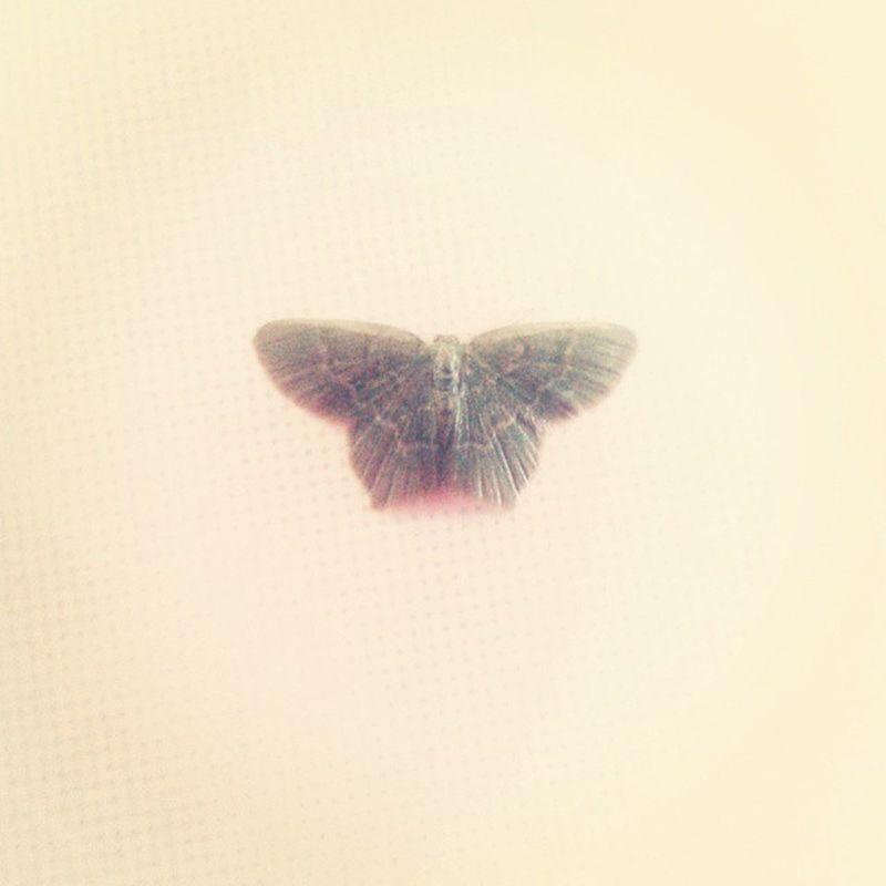 First time seeing this type of moth (kesian) Moth 2015  Puncakalam