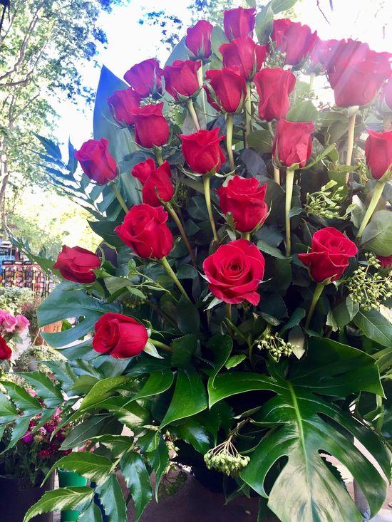 FlorsCarolina Rosas Roses Roses🌹 Roses Are Red Roses Flowers  Roses_collection Santjordi Santjordi2017 Lasramblas Barcelona EnergySupportBcn Catalunyaexperience Que tingueu una molt bona diada de Sant Jordi 🌹📖🐉🥂🎉📚#santjordi17 #jordis #jordines Avui a Catalunya estem de celebració‼️ #catalans #igerscatalunya #instacat #instabcn #barcelonacity @florscarolinabcn #florscarolina #florscarolinabcn #rosas #roses #llibres #santjordi #drac #dragon #santjordi2017 #sanjorge #loveit #barcelona #bcn #23abril2017 #diadadesantjordi2017 🌹🌹🌹 #23abril #díainternacionaldellibro #diainternacionaldelllibre 📸Photo credit @energysupport 😘💛❤️💛#energysupportbcn #april2017