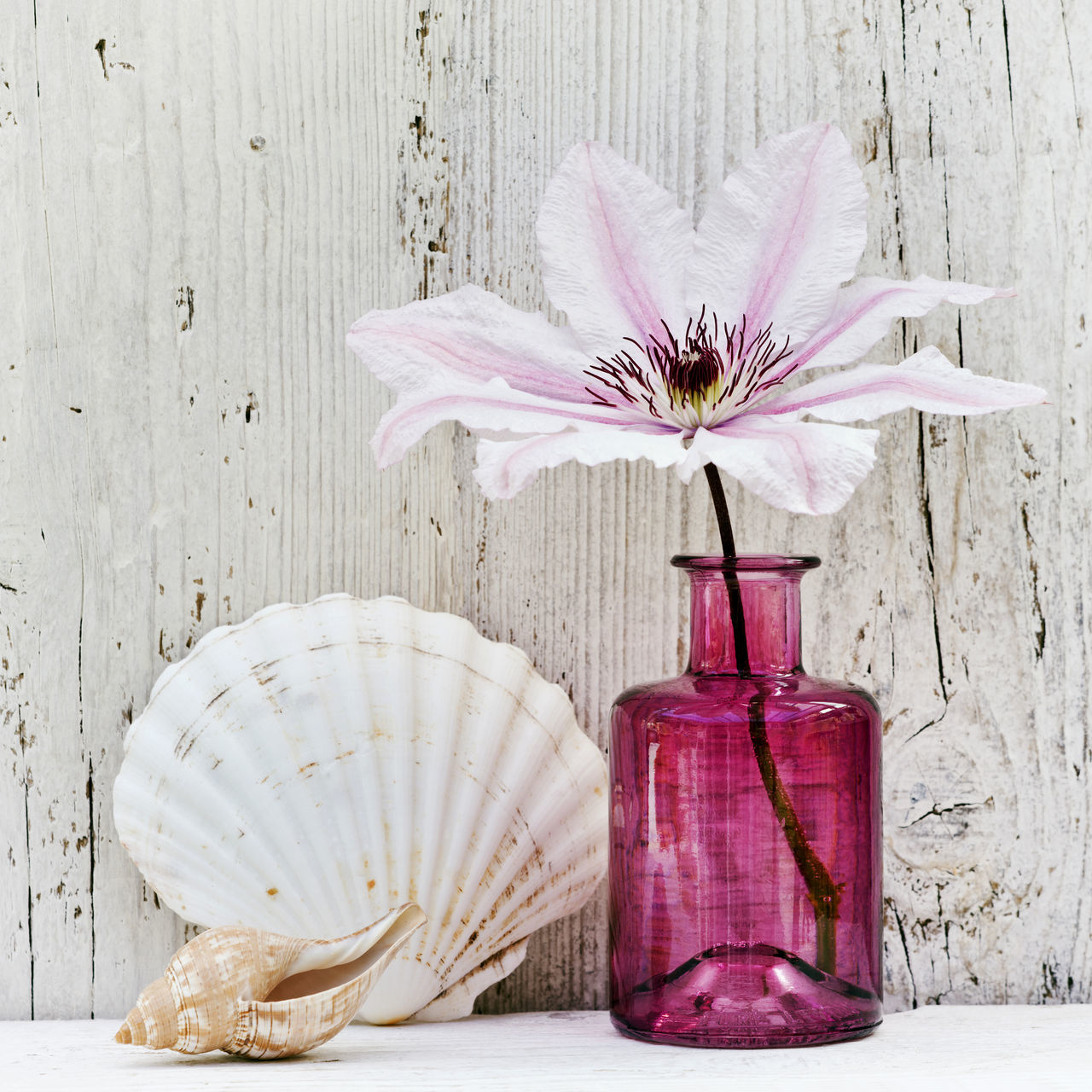 Beachlife Beauty In Nature Clematis Flower Close-up Coastal Day Decoration Flower Flower Arrangement Flower Head Fragility Freshness Growth Nature No People Petal Pink Color Plant Sea Shells 🐚 Simplicity Stem Still Life Vase Wood - Material Wooden Home is Where the Art is