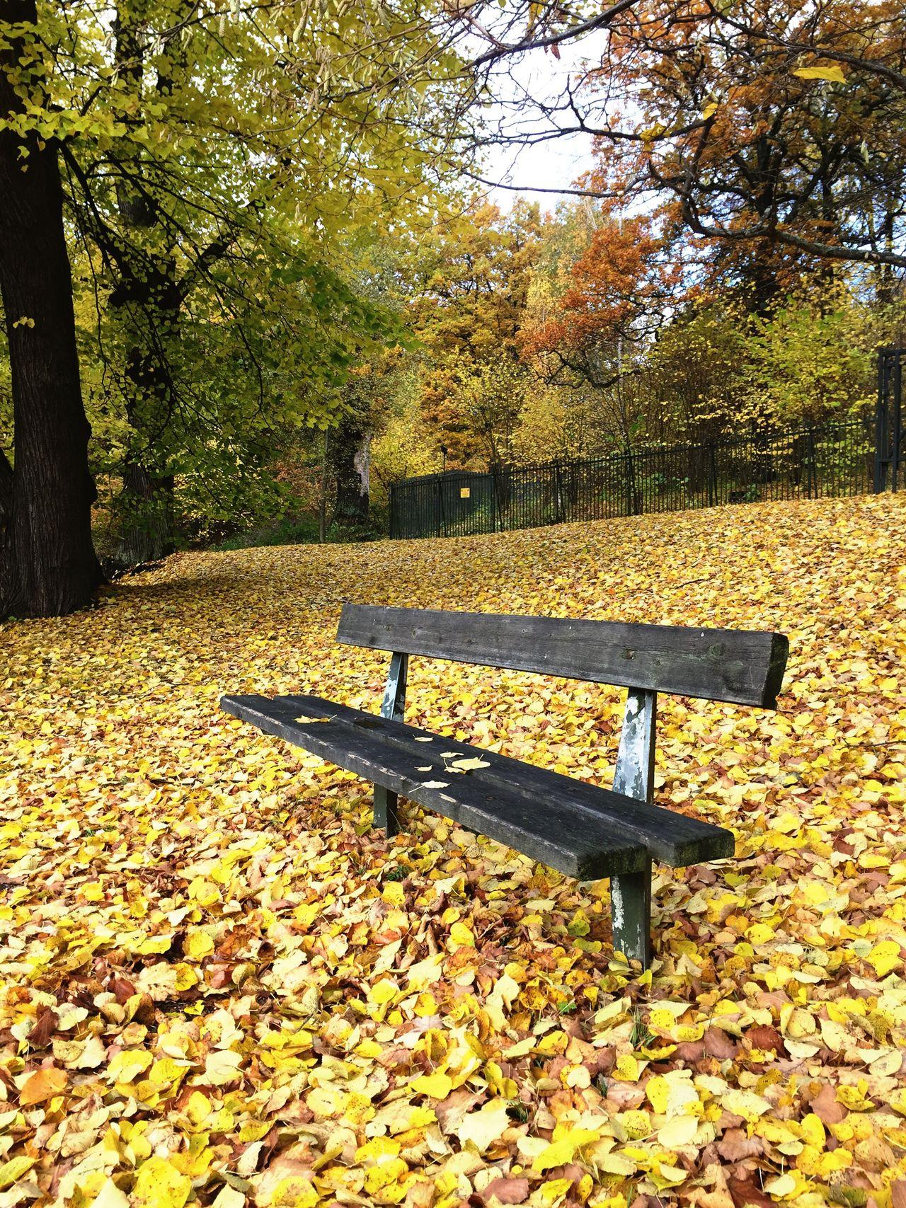 Sweden Autumn Nature Beauty In Nature Naturelovers Bankinthenature Park - Man Made Space Bank Lonely Thinking Thinking About Life Yellow Pleasebuyineedthemoney Pleasebuymyphoto Buythisone Buying Equipment