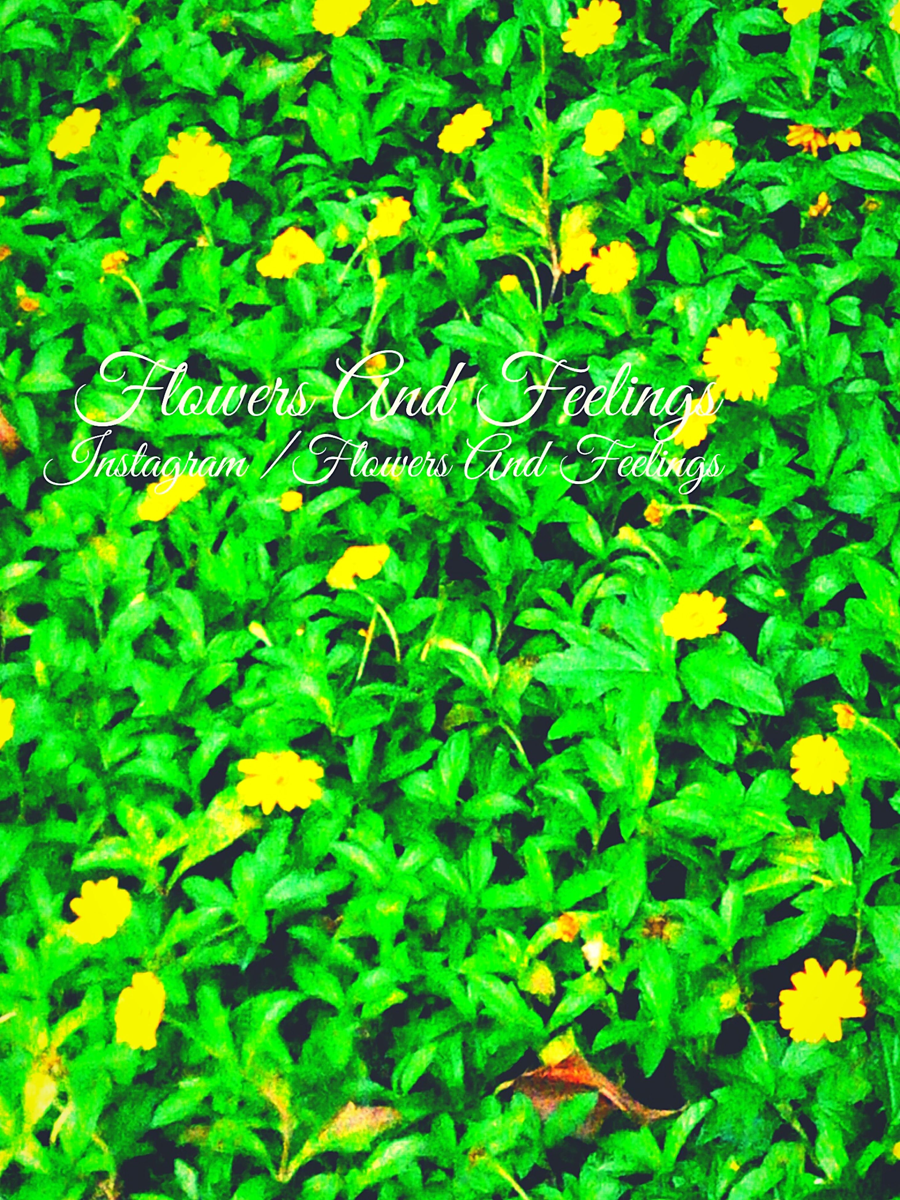 green color, leaf, growth, plant, high angle view, yellow, nature, full frame, freshness, beauty in nature, text, backgrounds, day, field, flower, outdoors, abundance, green, leaves, lush foliage