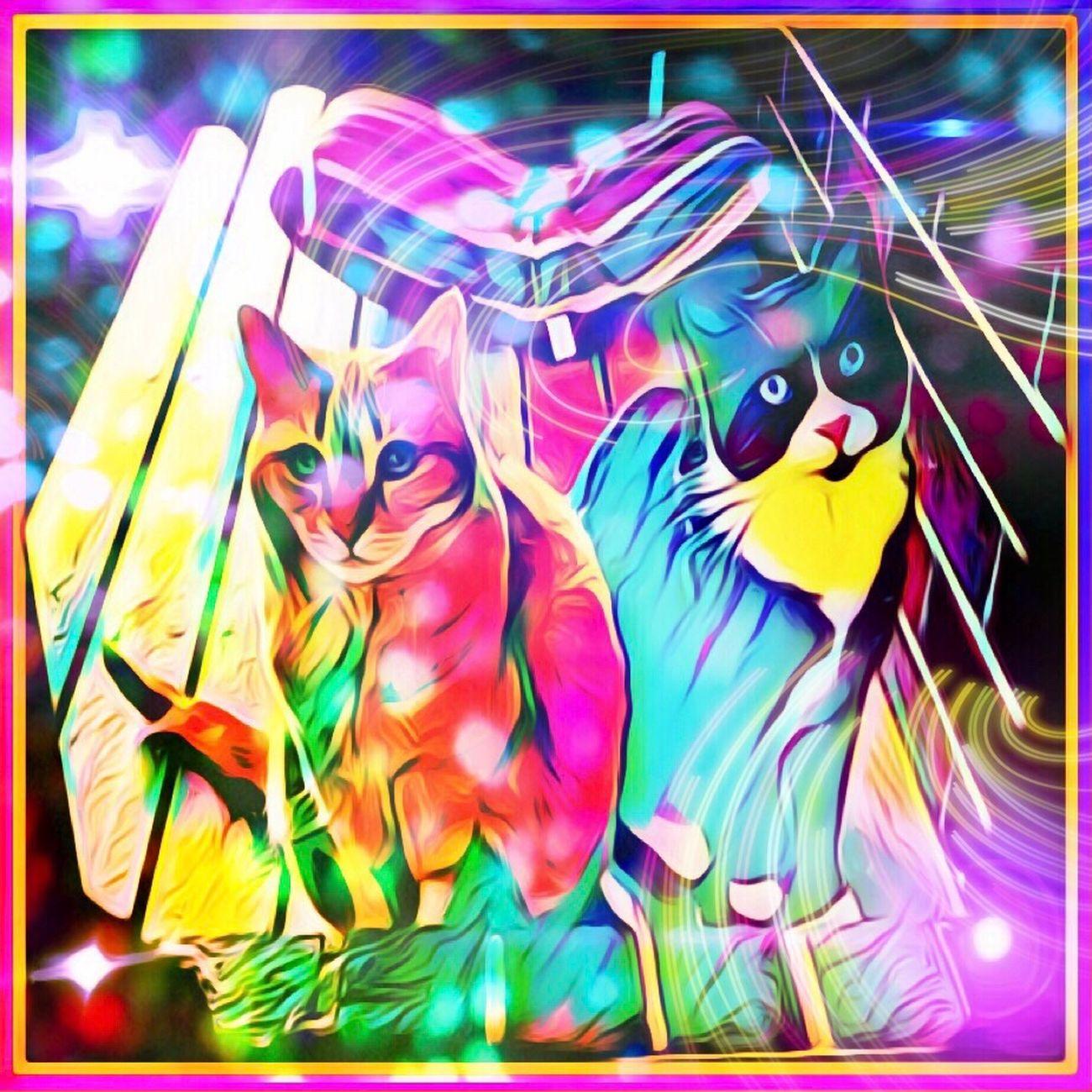 Cats 🐱😸🐱 Cats Feline Animals Pets Prisma Picsart Vibrant Colourful Fluro Rainbow MyArt