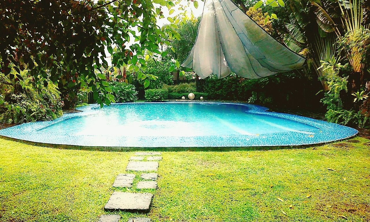 day, tree, no people, outdoors, green color, growth, grass, nature, swimming pool, water