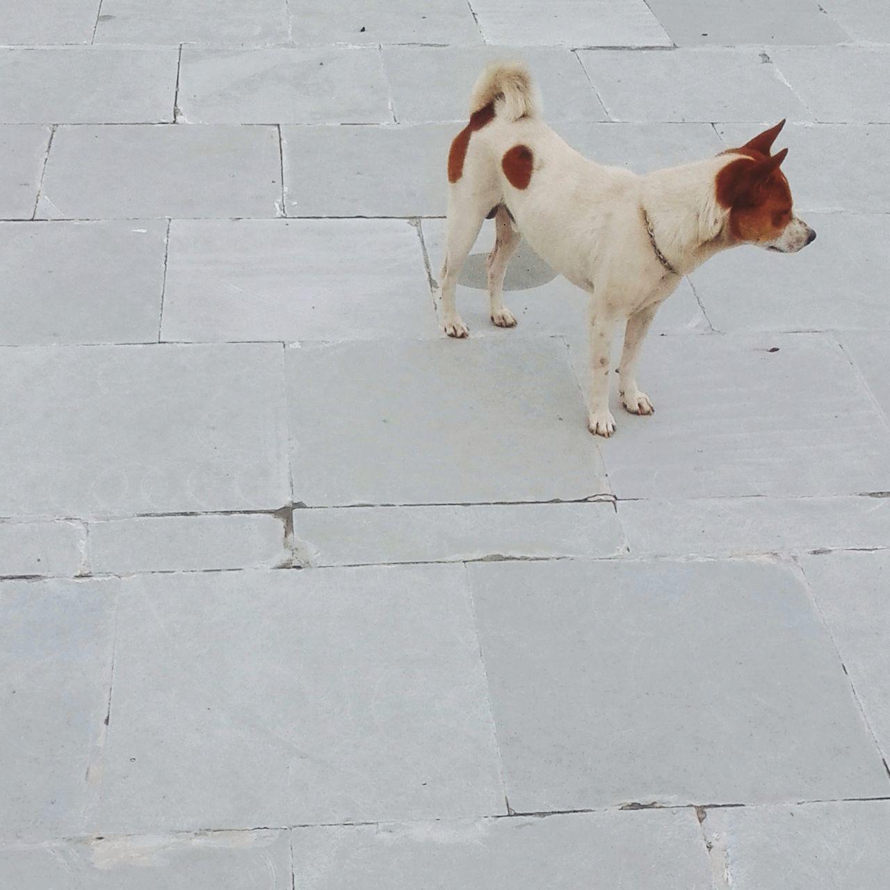 Say hello to him Dog EyeEmBestPics EyeEm Best Shots Animals Enjoying Life Bestoftheday India EyeEm Nature Lover EyeEm Gallery Hello World Check This Out Wanderlust