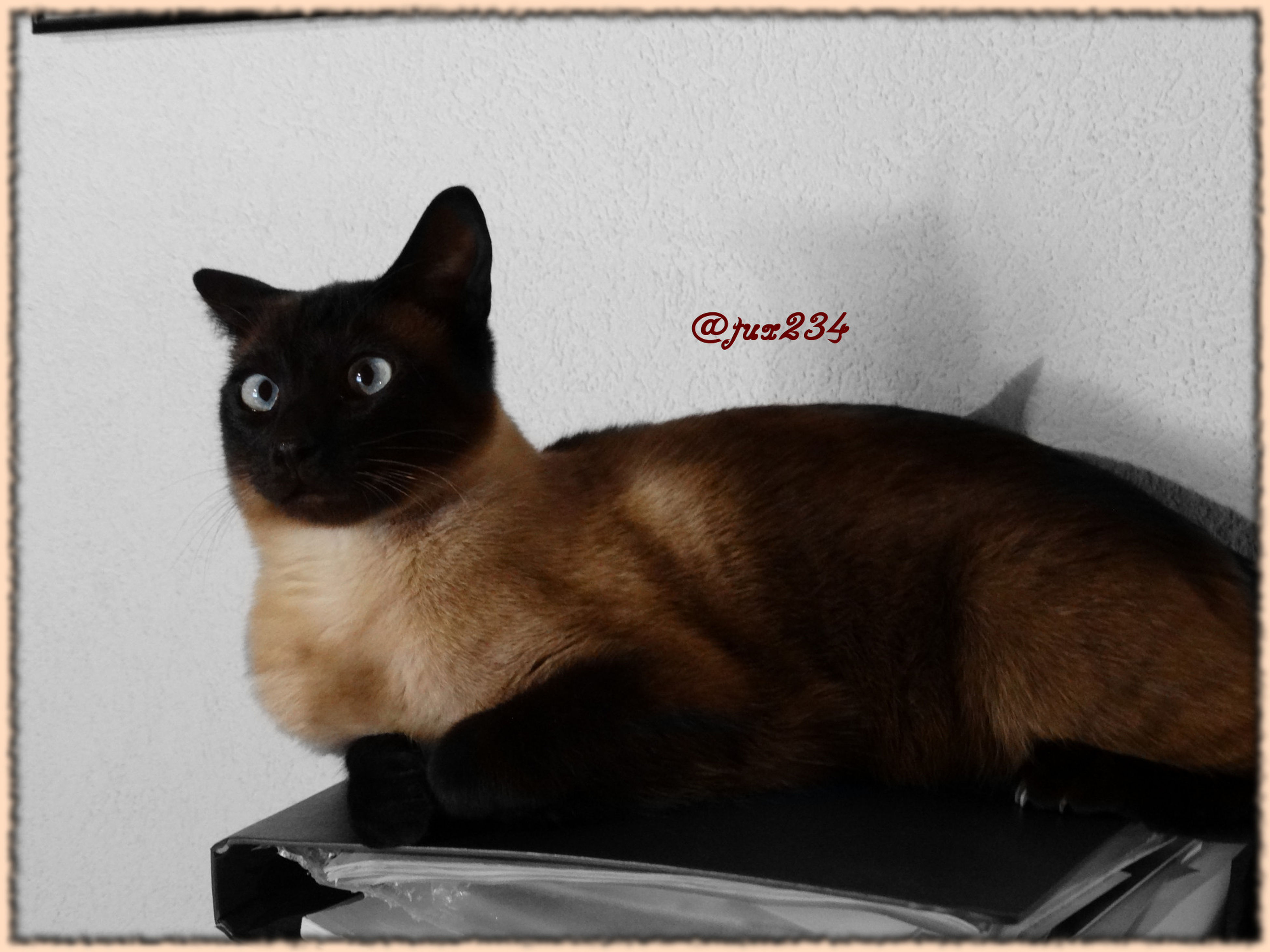 pets, domestic animals, animal themes, one animal, mammal, domestic cat, cat, indoors, feline, portrait, looking at camera, whisker, alertness, close-up, relaxation, sitting, transfer print, auto post production filter, black color